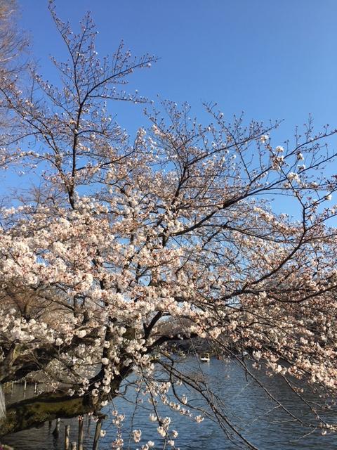 hamami_2018_3.png